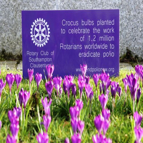 Vokes Memorial Gardens March 2018 the crocus plants donated and planted by members of Clausentum Rotary Branch with support from Southampton City Council